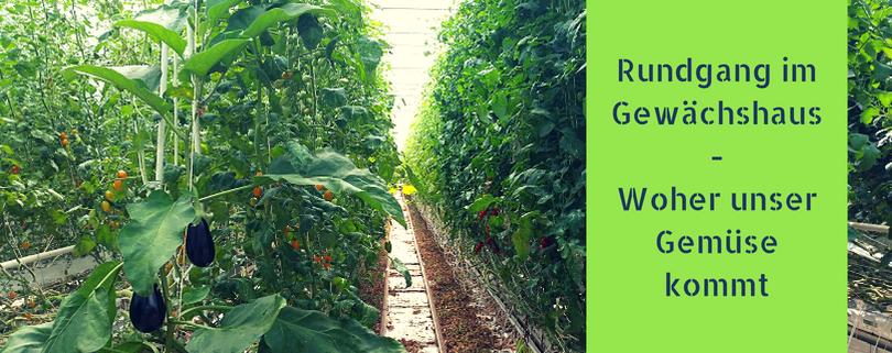 Rundgang im Gewächshaus - Woher unser Gemüse kommt