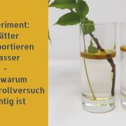 Experiment: Blätter transportieren Wasser - und warum ein Kontrollversuch wichtig ist